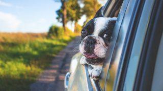 車中でも安心禁物!紫外線対策を施して肌に優しいドライブを楽しもう