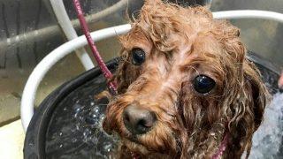 正しい洗髪方法(How-To)。 シャンプーは薄毛の毒にも薬にもなる!?